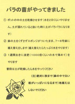 2019.5 パーマネントさん薔薇6