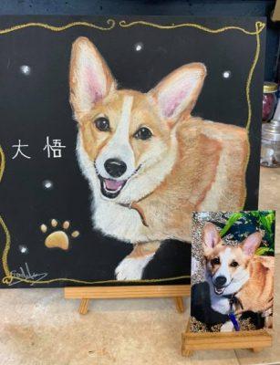 動物アート工房animoさん チョークアート 大悟ちゃん