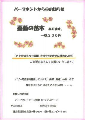 2019.5 パーマネントさん薔薇4