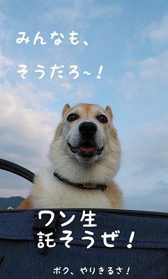 チョロちゃん お写真7