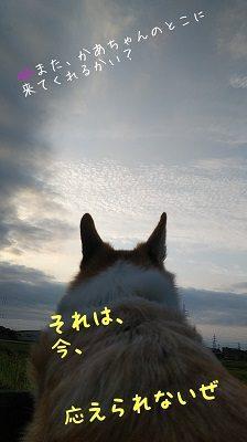 チョロちゃん お写真9