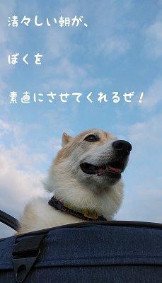 チョロちゃん お写真8