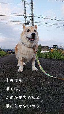チョロちゃん お写真5