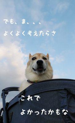 チョロちゃん お写真6